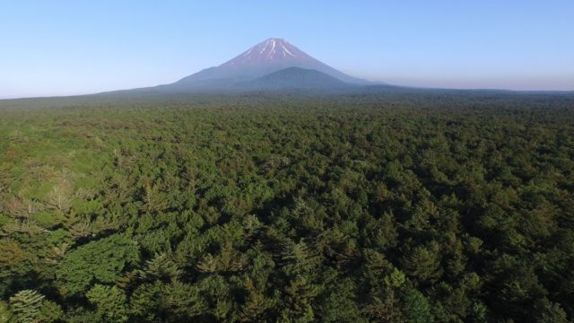 Aokigahara-and-Mount-Fuji1-1200×674